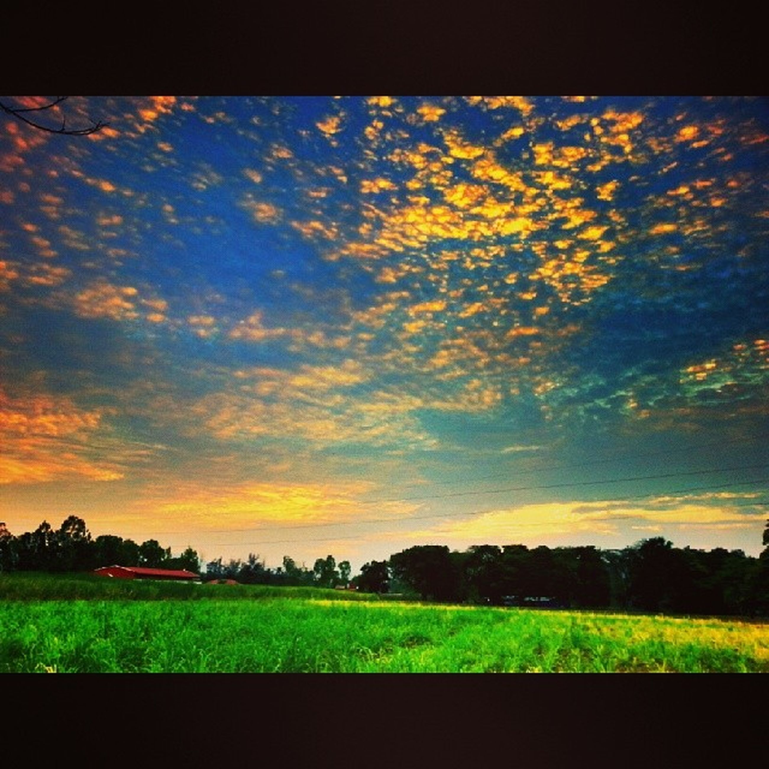 sky, field, grass, sunset, landscape, cloud - sky, tranquil scene, tranquility, beauty in nature, scenics, tree, nature, rural scene, cloud, grassy, growth, building exterior, cloudy, built structure, green color