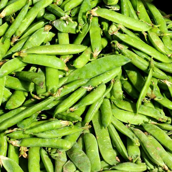 Sugarsnaps Sugar Snap Peas Fresh Produce Fresh Vegetables Crisp Green Peas Fresh Picked Sugar Snap Peas Backgrounds Full Frame Plant