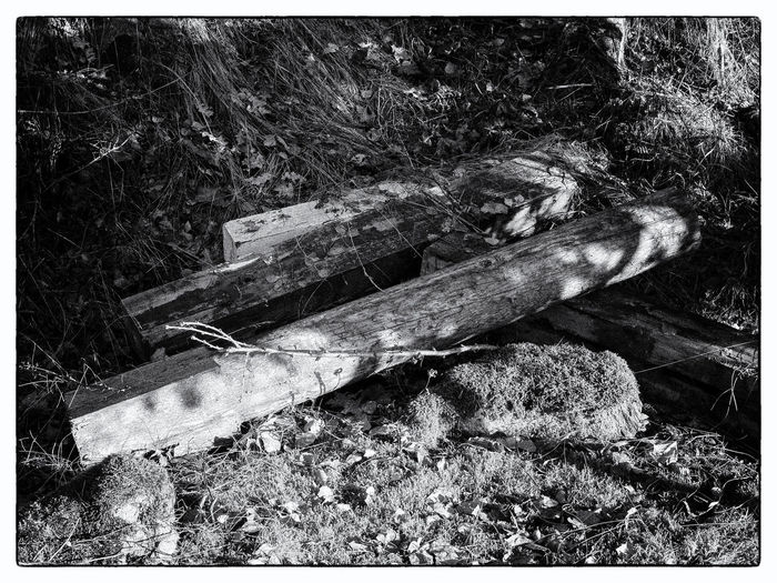 Logs by wood near the beach Nature No People Old Logs Rotten Logs Wood Wood - Material First Eyeem Photo