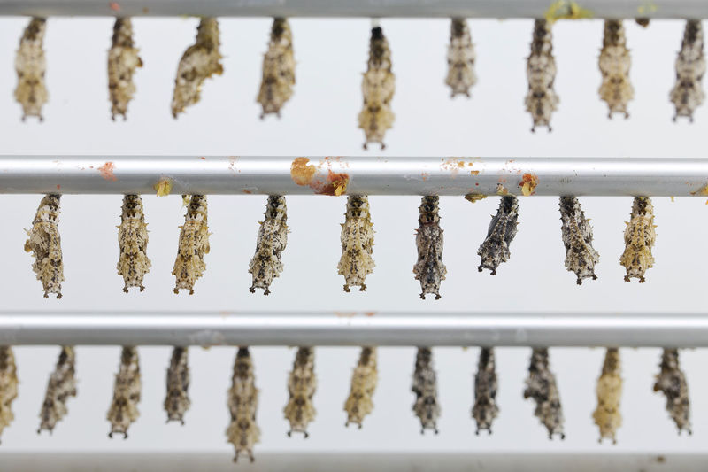 Close-up of catterpillars