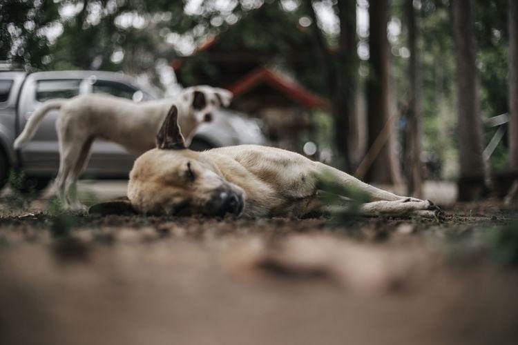 Dog Dogs Domestic Animals Dogs Of EyeEm Dog Love Dogslife Animal Themes Animals Animals In The Wild Eyeem Animals