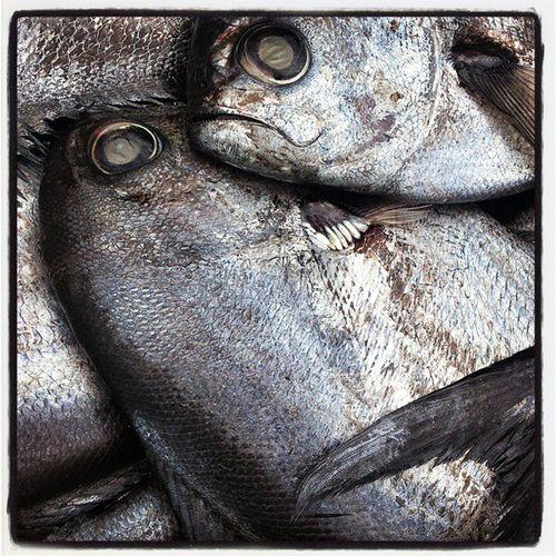 Pescado Reinetas