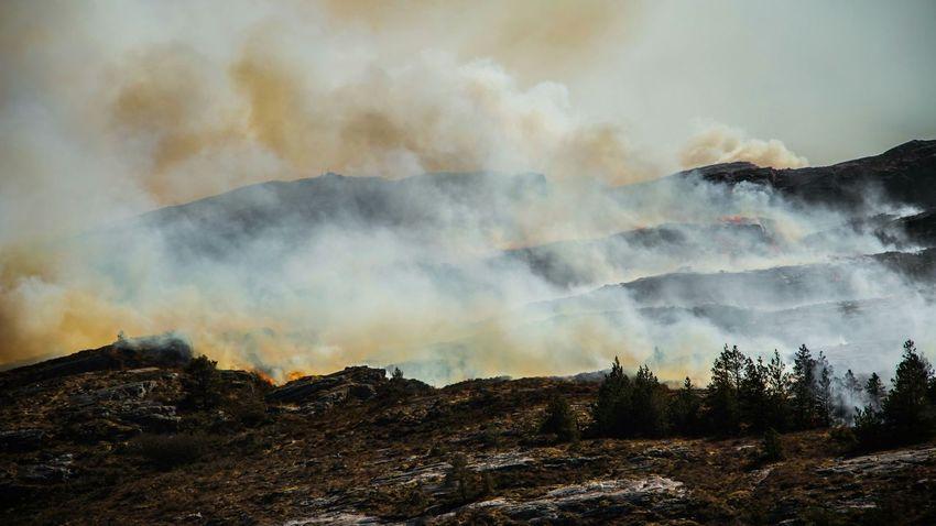 Forrest Fire Firefighter FireFighting  Smoke Fire