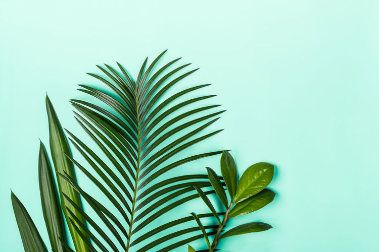 Close-up of palm leaves against blue background