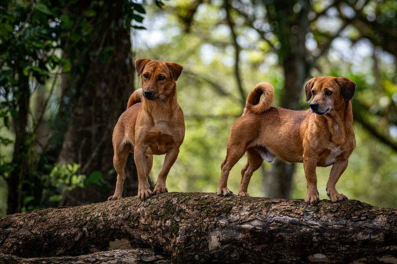 Dogs standing against plants