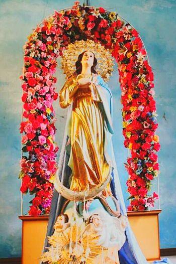 ImmaculateConception Virgin Mary Catholic Christianity Flower Mary Mama Mary