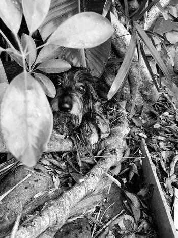 Peekaboo Cellularphotography Vegetation Animal Dauchshund Dog Plant Growth No People Nature High Angle View Day Close-up