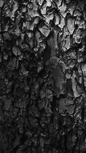 Detail shot of tree trunk
