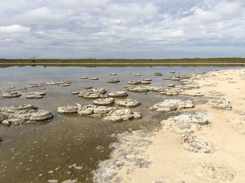 Lake Thetis: Drying out Landscape_photography Coastal Saline Water Cyanobacteria Geology Rock Sediment Layered Natural Phenomenon Living Marine Fossil Marine Living Fossil Stromatolites Lake Reflection Landscape Australia The Great Outdoors - 2016 EyeEm Awards Western Australia Nature Lake Thetis Drought Peaceful View