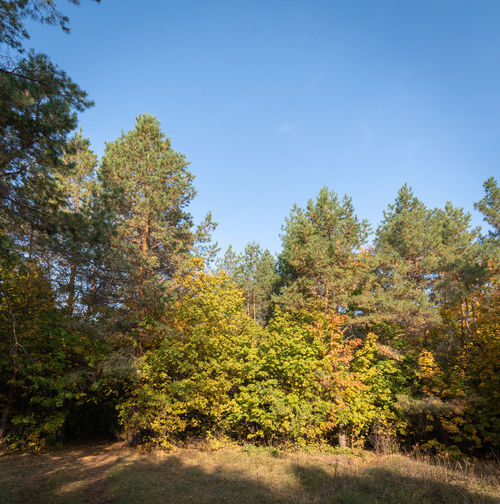 Trees growing in forest against sky during autumn