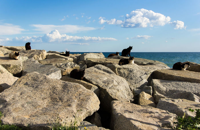 Balance Cat Cats Day Outdoors Relaxation Rock Sea Shore Stone Stray Cat Water Wild