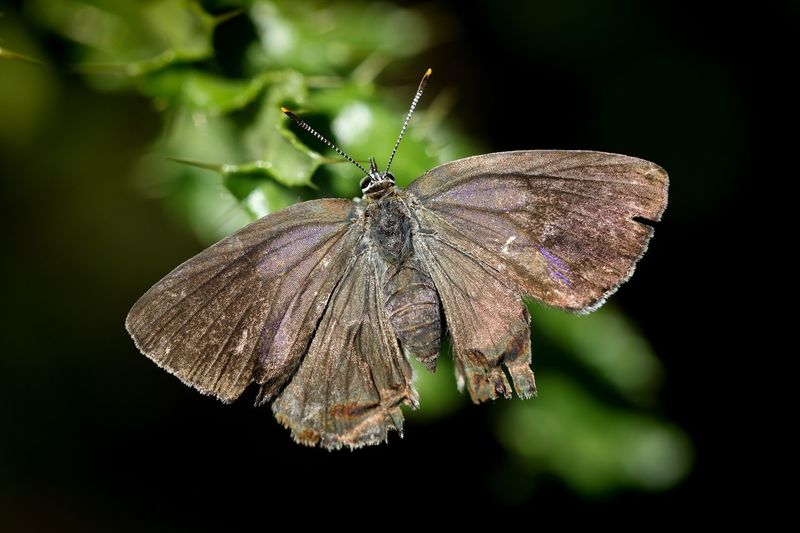 butterfly Butterfly Insect Animals In The Wild Close-up Animal Animal Themes Animal Wildlife Beauty In Nature Nature Butterfly - Insect