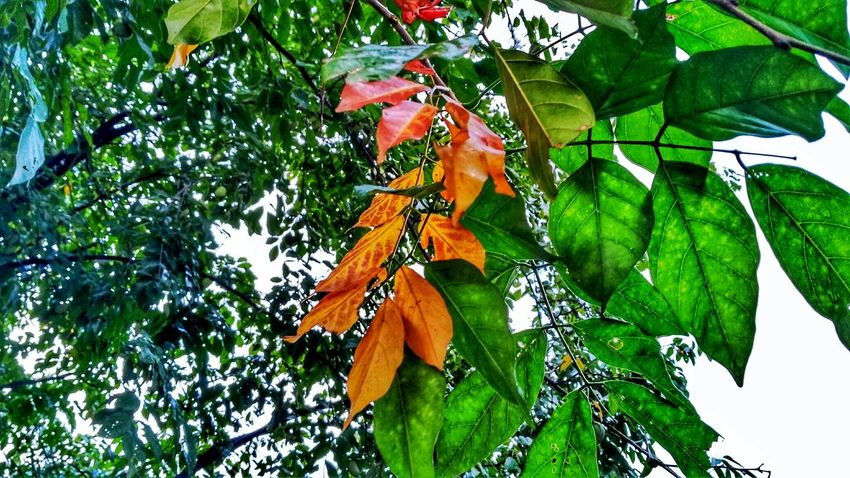 Leaf Green Color Tree Low Angle View Day Nature Growth Beauty In Nature Perching Freshness Close-up Branch Outdoors No People The Week On EyeEm