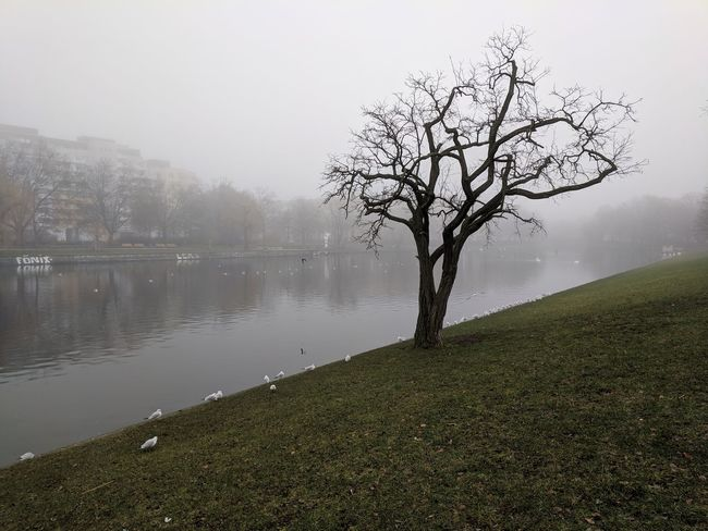 Winter in Berlin, instead of frozen water and snow all you get is this lousy Fog. // Tranquility Bare Tree Beauty In Nature Nature Tranquil Scene Landscape Tree Water Outdoors Day Scenics No People Hazy  Sky Cold Temperature Branch Winter Lake Remote Grass Mist Google Pixel F/2.0 via Fotofall