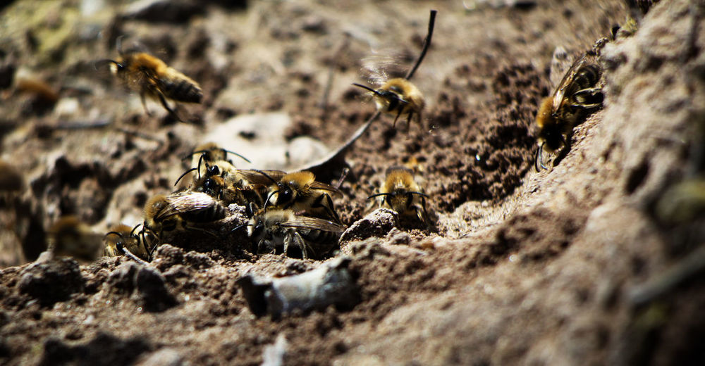 Animal Themes Animal Wildlife Animals In The Wild APIculture Bee Beehive Close-up Colony Day Honey Bee Honeycomb Insect Nature No People One Animal Outdoors Selective Focus Wildlife Perspectives On Nature