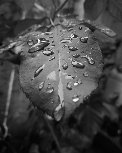 First Eyeem Photo Water Rain Nature Beautiful Likeforlike Like Beauty In Nature Follow4follow Likes Day World