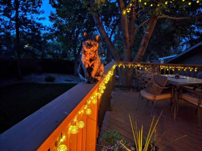 Panoramic view of illuminated candles on tree trunk at night