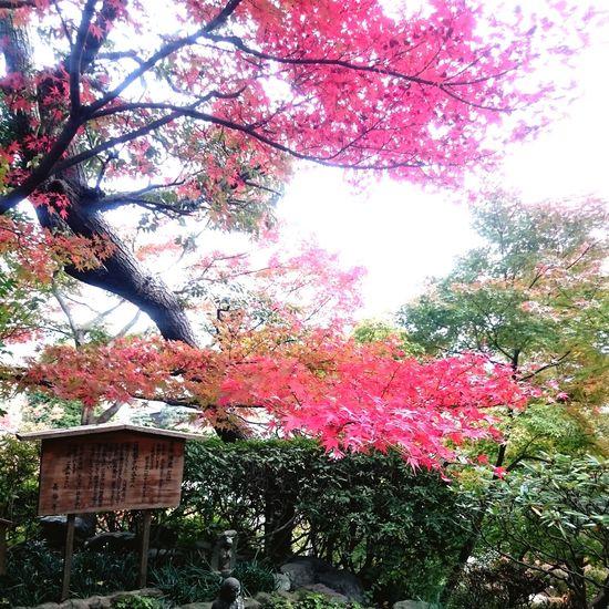 Tree Japan