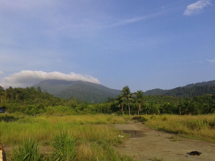 Mount Silam at Lahad Datu Sabah, Malaysia Lahad Datu Malaysia EyeEmNewHere Mountain Sky Blue Sky White Clouds Urban Area Beauty In Nature Natural The Purist (no Edit, No Filter) Coconut Trees