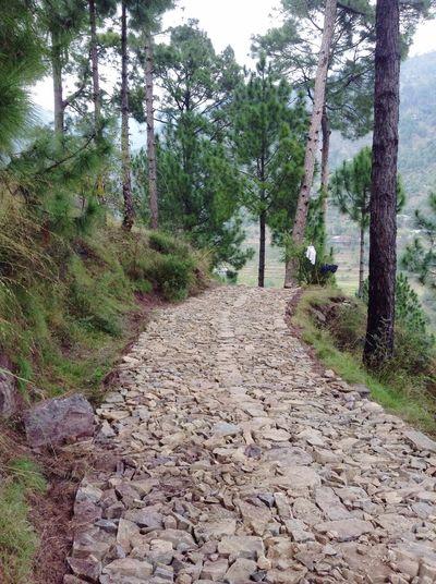 Me Way Khasmir Wonderfulplace Peaceful Nature Like Beautiful Mytrip Myland  Hiking Lovely Trees Wind 😘❤️📸