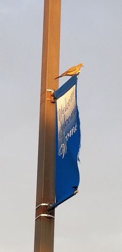 Bird Wildlife & Nature Outdoors Differing Abilities Road Sign Communication Instructions Guidance Text Close-up Directional Sign Information Information Sign Signboard