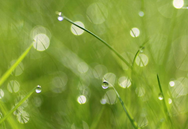 Beauty In Nature Blade Of Grass Close-up Dew Drop Fragility Freshness Grass Green Color Growth Leaf Nature No People Outdoors Plant Plant Part Purity Rain RainDrop Selective Focus Springtime Tranquility Vulnerability  Water Wet