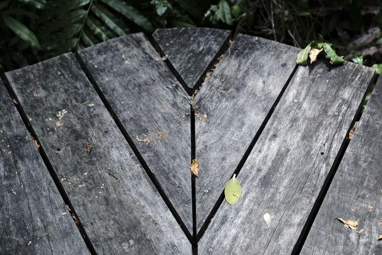 WOOD DARK Tree High Angle View Wood - Material Close-up Tree Stump Deforestation Blooming Tree Ring Log Timber Woodpile Moss