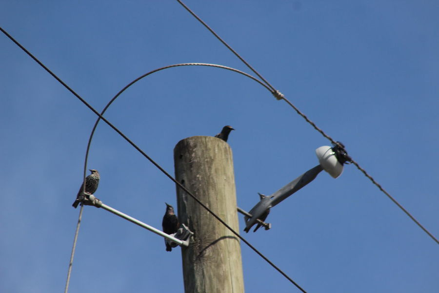 Bird Clear Sky Connection Electric Pole Electricity  Low Angle View Outdoors Popular Photos Power Line  Power Supply Sky