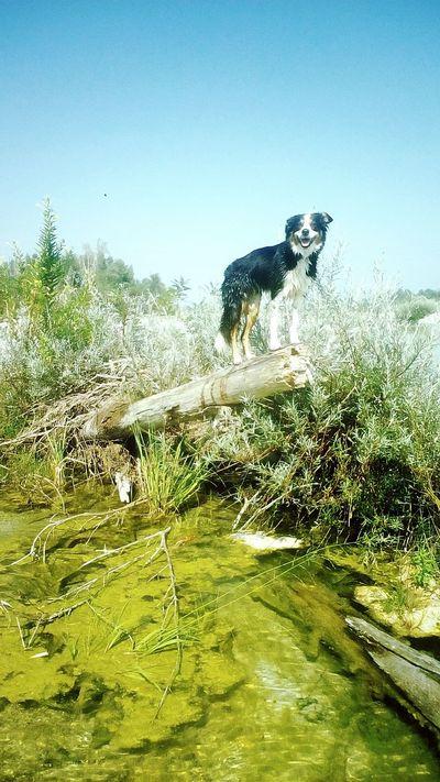 EnjaTheNinja Dog Bordercollie  Hanging Out Family Mydog River Walk Meduna Italy🇮🇹 Animal