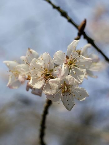 Blossom Blooming Tree Blossoms Springtime Spring Has Arrived Spring Blossoms Nature Photography Nature Life Nature Lover Nature EyeEm Bokeh Bokeh Photography Nikon Photographer