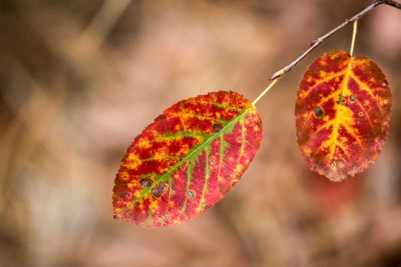Beautiful colors of nature EyeEm Nature Lover Eyem Best Shots Nature_collection EyeEm Best Shots - Nature Close-up Autumn Plant Part Focus On Foreground Leaf Plant Nature Beauty In Nature Leaf Vein Fragility