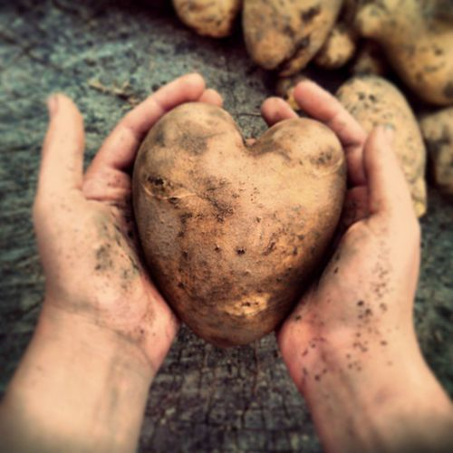 While digging the potatoes :D The slovak soil loves mee :3 Slovak Slovakia Slovensko Insta_svk Potatoes Heart Hands Nature Love