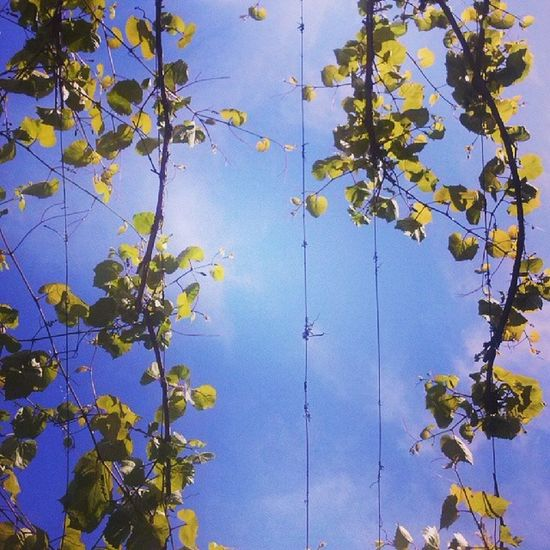 Igerspisa Igersitalia Igerstuscany Instaitalia photooftheday sky blue life