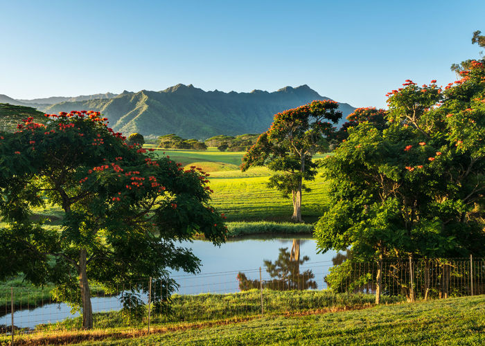 Gorgeous view of a ranch on Kauai that was used in the filming of Jurassic Park at sunrise Kauai Beauty In Nature Tranquility Tranquil Scene Landscape Scenics - Nature Lake Field Agriculture Outdoors No People Environment Hawaii Jurassic Park Jurassic Ranch Mountain Range Reflection Gorgeous View Striking Fine Art Photography Sunrise
