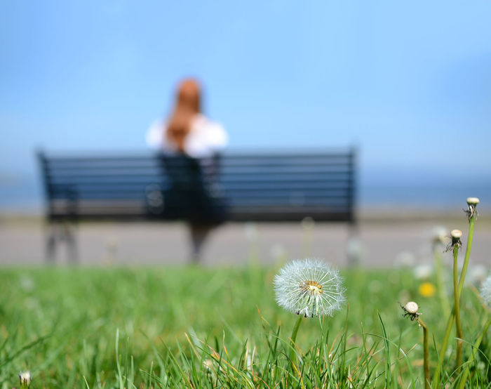 Beauty In Nature Bench Benches_Of_The_World_Unite Cramond Dandelion Flower Freshness Grass Growth Looking Outdoors Relaxing Seeds Watching Woman