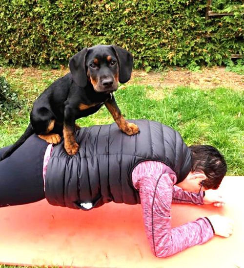 Dog Pets Mammal Portrait Sports Photography Sport Plank Funny Strong Strongwoman