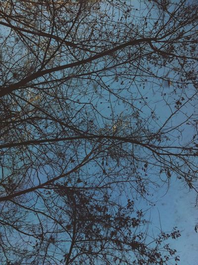 Sky And Trees Trees Beautiful Lonliness Amazing View Relaxing There Is Nothing To Be Sad About.. That's All