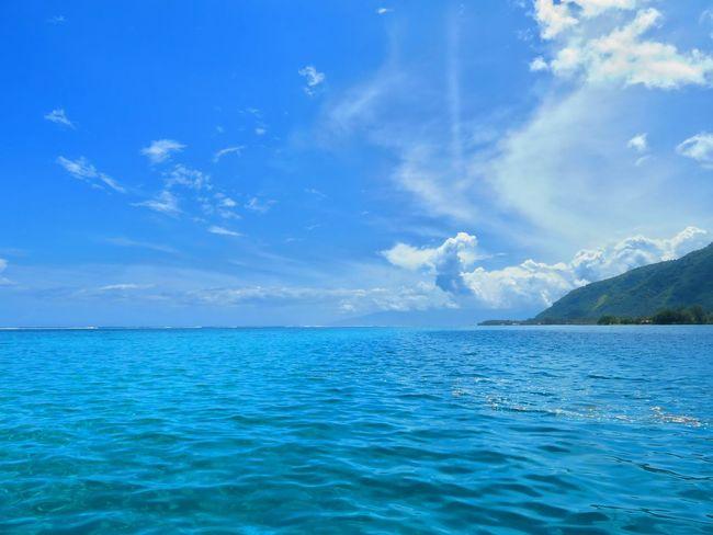 Water Sea Tree UnderSea Blue Beach Beauty Tropical Climate Sky Landscape Summer Exploratorium