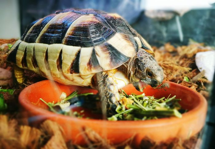 Animal Themes One Animal Animals In The Wild Animal Wildlife Day Nature Reptile Food Pets Turtle 🐢 Schildkröte Reptile Terrarium🍀