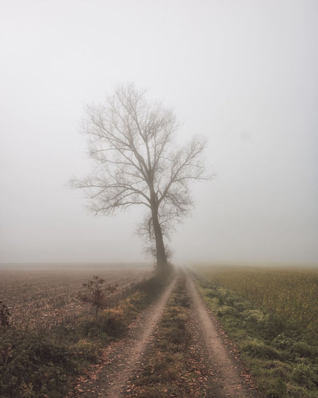 Road amidst trees on field against sky during foggy weather