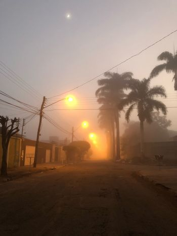 Sun Palm Tree Cable Sunset Tree No People Outdoors Sky Clear Sky Electricity Pylon Nature Beauty In Nature Day Fog Foggy Foggy Morning Foggy Day Light Light And Shadow Lights
