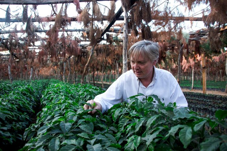 Coffee nursery at Guatemala Plant Growth One Person Day Nature Front View Adult Mature Adult Agriculture Headshot Portrait Waist Up Green Color Tree Gray Hair Lifestyles Outdoors Beauty In Nature Hairstyle Gardening