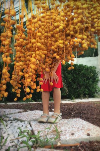 Low section of girl hiding against date palm tree