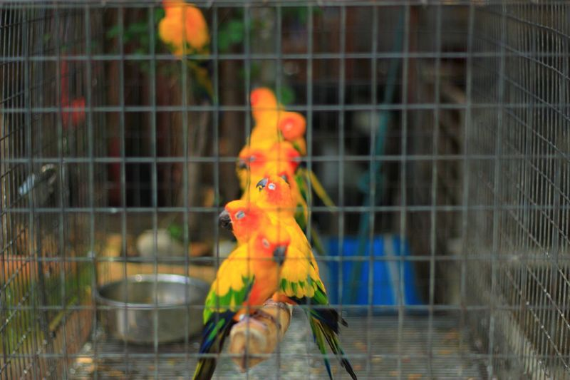 Close-up of parrot perching in cage