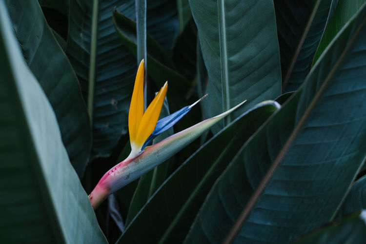 Quinta da Regaleira Nature Beauty In Nature Bird Of Paradise - Plant Blooming Close-up Day Flower Flower Head Fragility Freshness Green Color Growth Leaf Nature No People Outdoors Park Petal Plant
