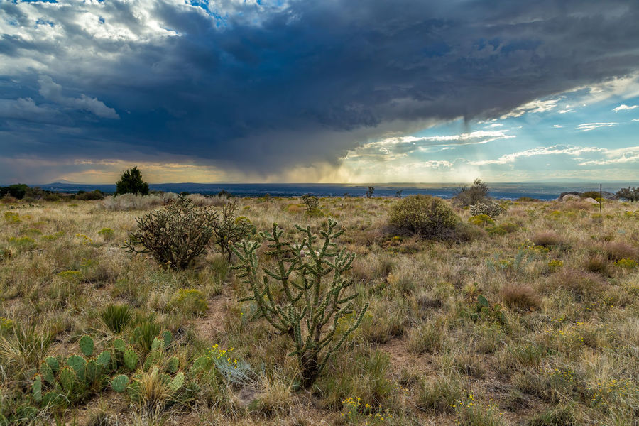 Accidents And Disasters Albuquerque Atmospheric Mood Cloud - Sky Day Grass Growth Horizon Horizon Over Water Landscape Nature New Mexico No People Outdoors Scenics Sea Single Tree Sky Social Issues Storm Storm Cloud Sunset Tree Virga Weather