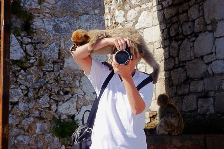Ape Camera - Photographic Equipment Day Digital Camera Holding Lazy Assistent Leisure Activity Looking At Camera Mokey One Animal Outdoors Pavian Photographer Photographing Photography Themes Standing Pet Portraits
