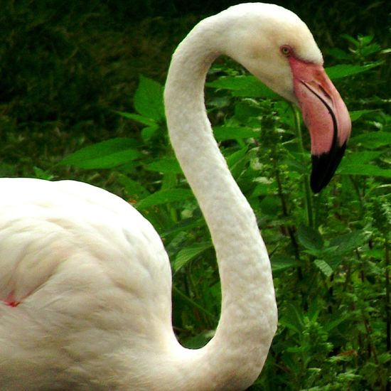 Martin Mere Walking Around Bird Watching Flamingo Flamingos Flamingos Up Close Wetlands EyeEm Nature Lover Eyeem Birds Lover EyeEm Birds