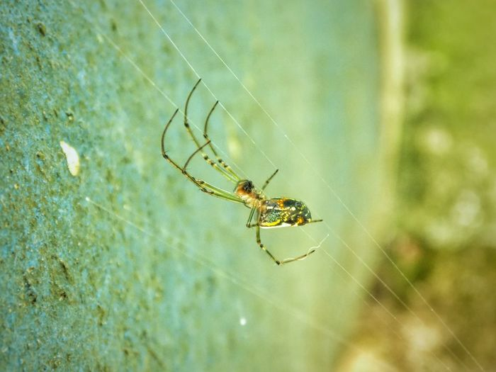 Spider Web Spider Insect Web Survival One Animal Nature Focus On Foreground Animal Leg Animal Themes Day No People EyeEm Selects EyeEmNewHere Outdoors Full Length Fragility Spider Mexico Macro_collection Macro Photography Macro