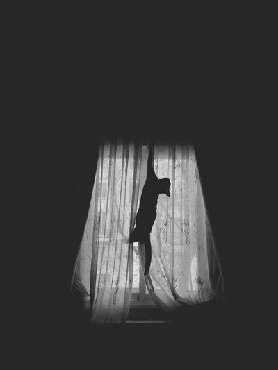 SpiderCat in action 🤡 Madrid Cat Hanging Out Cat Silhouette Black N White Cat Black & White Cat Silhouette Cats Cat Full Length Silhouette Indoors  Real People One Woman Only Shadow